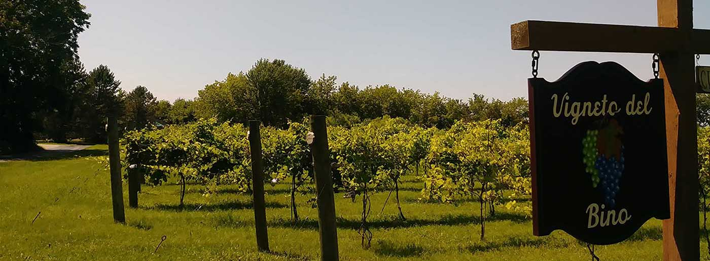 Vineyard & Winery