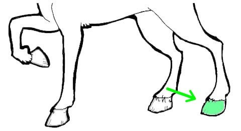 Back Left Hoof
